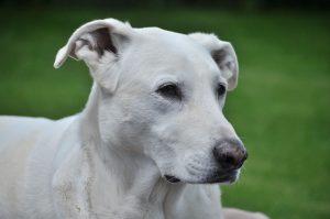 Leitfaden zur Betreuung von Hunden