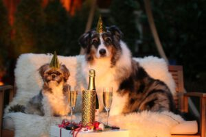 Tiere und Silvester