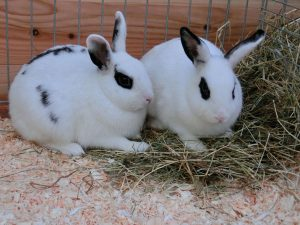 Leitfaden zur Betreuung von Kaninchen