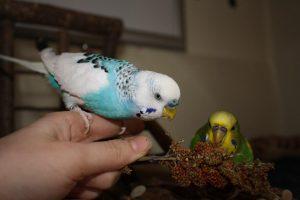 Leitfaden zur Betreuung von Vögeln
