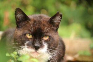 Netzwerk Katzenschutz – Situation streunender Katzen